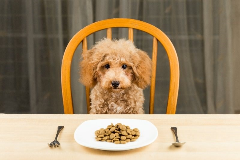 Pet Health: Natural Nutrition