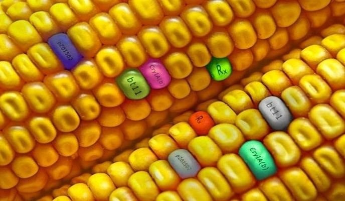 The Dangers of Genetically Modified Foods