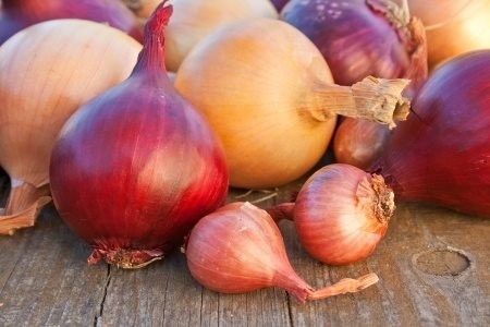 Onion (Any Type)